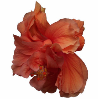 double peach hibiscus flower cutout