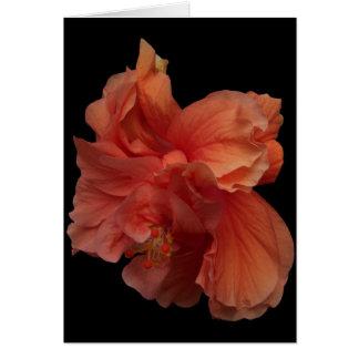 double peach hibiscus flower notecard