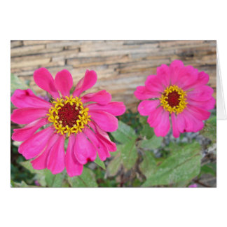 Double pink blooms greeting cards