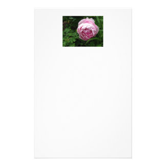 Double Pink Peony - Photograph Stationery
