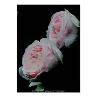 Double Pink Roses Flower Photography Poster Print