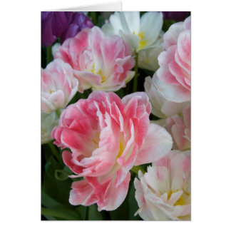 Double Pink Tulips Greeting Card