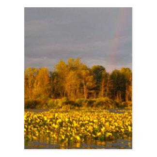 Double Rainbow Pond Postcard