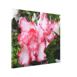 Double Red and White Azaleas Spring Floral Canvas Print
