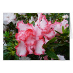 Double Red and White Azaleas Spring Floral Card