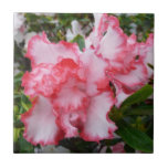 Double Red and White Azaleas Spring Floral Ceramic Tile