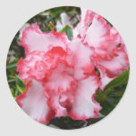 Double Red and White Azaleas Spring Floral Classic Round Sticker