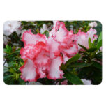 Double Red and White Azaleas Spring Floral Magnet
