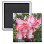 Double Red and White Azaleas Spring Floral 2 Inch Square Magnet