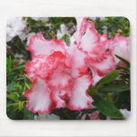 Double Red and White Azaleas Spring Floral Mouse Pad