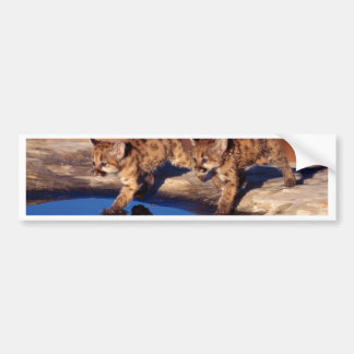 Double Reflections Bumper Sticker