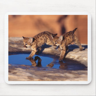Double Reflections Mouse Pad
