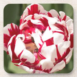 Double Striped Tulip Drink Coaster