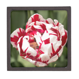 Double Striped Tulip Jewelry Box
