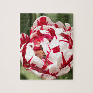 Double Striped Tulip Jigsaw Puzzle