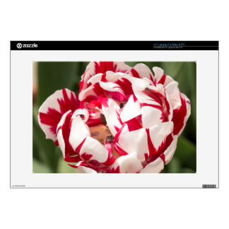 Double Striped Tulip Laptop Decal