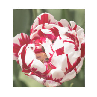 Double Striped Tulip Notepad