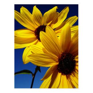 Double Sunflower Postcard