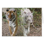 DOUBLE TROUBLE 2 TIGERS ORANGE/WHITE GREETING CARD