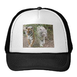 DOUBLE TROUBLE 2 TIGERS ORANGE/WHITE HATS