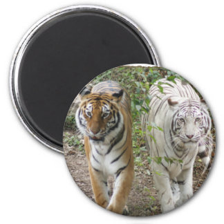 DOUBLE TROUBLE 2 TIGERS ORANGE/WHITE MAGNET