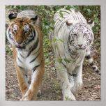 DOUBLE TROUBLE 2 TIGERS ORANGE/WHITE PRINT