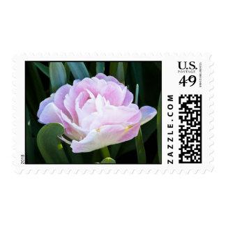 Double Tulip Postage Stamp