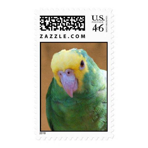 Double Yellow Headed Amazon Postage Stamp