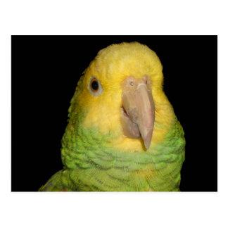 Double Yellowhead Amazon Parrot Postcard