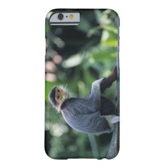 Douc langur (Pygathrix nemaeus) sitting on Barely There iPhone 6 Case