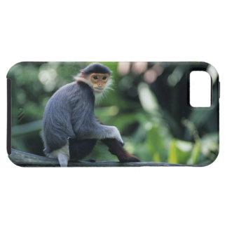Douc langur (Pygathrix nemaeus) sitting on iPhone SE/5/5s Case