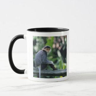 Douc langur (Pygathrix nemaeus) sitting on Mug