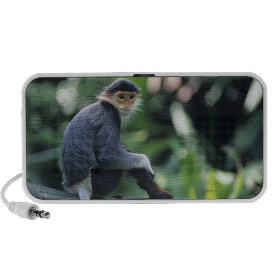 Douc langur (Pygathrix nemaeus) sitting on Portable Speaker
