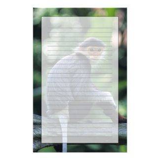 Douc langur (Pygathrix nemaeus) sitting on Stationery