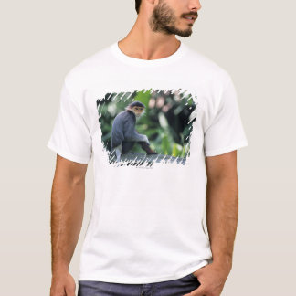 Douc langur (Pygathrix nemaeus) sitting on T-Shirt