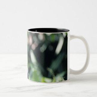 Douc langur (Pygathrix nemaeus) sitting on Two-Tone Coffee Mug