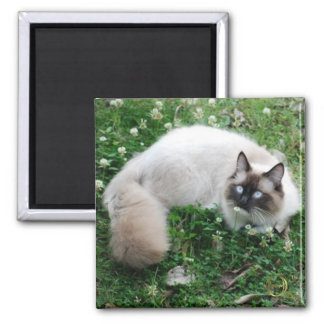 Dougal Amongst the Clover 2 Inch Square Magnet