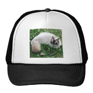 Dougal Amongst the Clover Hats
