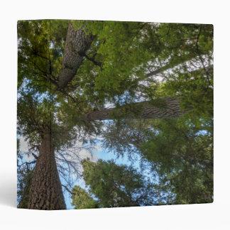 Douglas Fir tree canopy Vinyl Binders