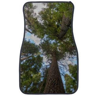Douglas Fir tree canopy Car Floor Mat
