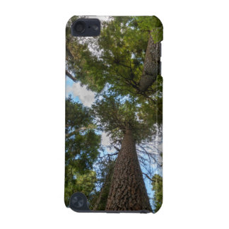 Douglas Fir tree canopy iPod Touch (5th Generation) Case