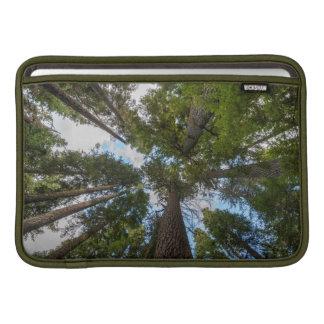 Douglas Fir tree canopy MacBook Air Sleeve