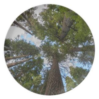 Douglas Fir tree canopy Melamine Plate