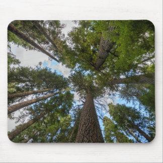 Douglas Fir tree canopy Mouse Pad
