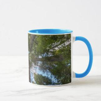 Douglas Fir tree canopy Mug