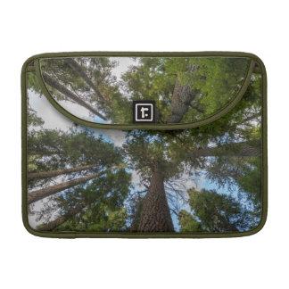 Douglas Fir tree canopy Sleeve For MacBook Pro