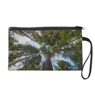 Douglas Fir tree canopy Wristlet Purse