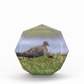 Dove Bird Acrylic Award