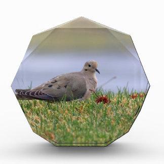 Dove Bird Awards