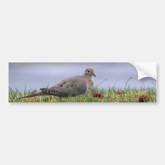 Dove Bird Car Bumper Sticker